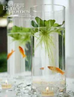 SIMPLE WATER GARDEN = water lettuce, water plant, decorative stones + small fish: Growing Plants, Simple Water, Water Plants, Garden Floral Fish, Aquarium, Beta Fish, Indoor Gardening, Small Fish, Water Garden