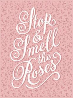 Smell the Roses – 55 Hi's: Pink Roses, Bellafaye Roses, Stop And Smell The Roses, Pink Quotes, Color Pink, Rose Cottage, Roses Smell