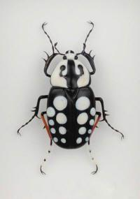 spiked, patterns, shapes, black and white, opposite color pattern, strange, wild: Bugs And Insects Photos, Beautiful Beetles, Beautiful Bugs, Beetles Insects, Arte Insectos, Animal