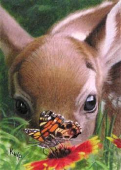 Spring Time: Butterfly, Critter, Sweet, Butterflies, Adorable Animals, Baby Animals, Deer