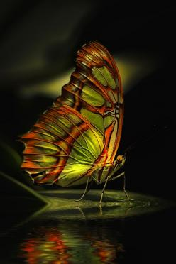 Ssss!...Uhm, This Place Is Really Attractive...Samissomar's Pinterests Are So Inspiring !... http://samissomarspace.wordpress.com: Beautiful Butterflies, Butterfly, Animals, Nature, Color, Flutterby