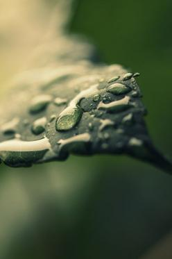 The Element • Water: Oh It's Raining Again - By Victoria Ie. #Rain drops on a leaf. #Nature #Macro: Gota Puede, April Shower, Green, Graffite Art Photography, Nature Photography, Dewdrops, Rain, Beautiful Nature