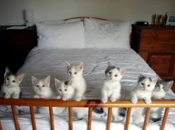 The itty bitty kitty committee kittens in a row: Cats, Animals, Bed, Crazy Cat, Adorable, Kittens, Kitties, Kitty, Cat Lady