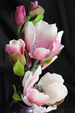 The Magnolia flower ~ is attached with symbols of nobility, perseverance, and love of nature.: Magnolias, Most Beautiful Flowers, Garden, Flower, Magnoliaflower