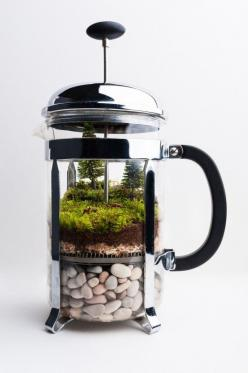 The Most Adorable Thing I've Ever Seen: French Press Re-purposed as a Terrarium: French Press, Idea, Press Terrarium, Coffee, Press Repurposed, Frenchpress, Garden