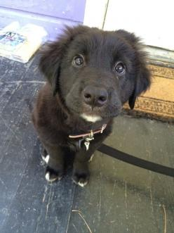 These puppy dog eyes deserve every snackie the world has to offer. EVERY. SINGLE. ONE.: Face, Animals, Puppies Dogs, 27 Puppies, Puppys