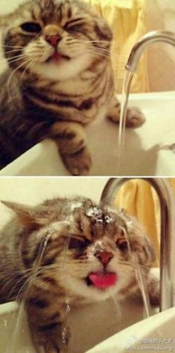 This cat is not a fan of the Summer heat. #WorldCatDay 8/8/14: Cats, Animals, Kitty Cat, Kitten, So Cute, Funny Cat, Pet, Crazy Cat, Cat Lady