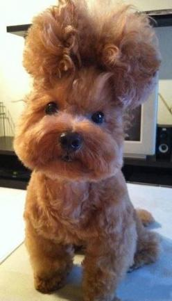 This dog's fab hairdo. | 50 Most WTF Animal Pics Of The Year: Animals, Dogs, Pet, Hairs, Funny, Puppy, Things