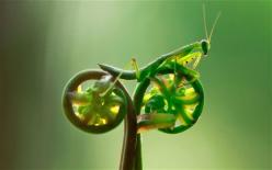 This is the incredible snapshot that appears to show an insect riding off into the sunset - on a bicycle.: Photos, Animals, Bike, Nature, Bugs, Funny, Insects, Praying Mantis, Bicycle