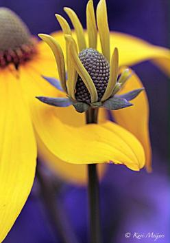 This pin has the most beautiful garden and flower pictures - so lovely!: Purple, Color, Posts, Beautiful Flowers, Garden, Photo, Kari Meijers, Yellow Flower, Flower