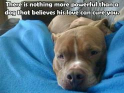 True!! Hunter is already trying to heal me :): Animals, Dogs, Pet, So True, Cure, Pittie