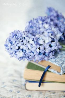 Waiting for Spring by loretoidas, via Flickr: Books, Blue Hydrangea, Lilac, True Blue, Beautiful, Things, Flowers, Photo, Spring