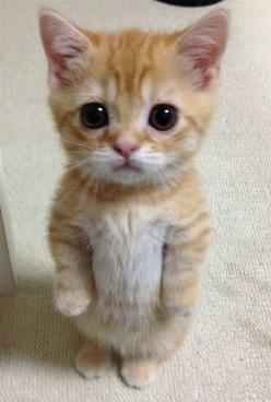 Well, this is ADORABLE!: Cats, Cuteness, Animals, So Cute, Pet, Funny, Adorable, Kittens, Kitty