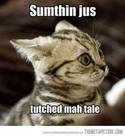 Yeah, my cats get paranoid like that. :P: Cats, Animals, Kitten, Funny Cat, Funny Stuff, Funnies, Humor, Things