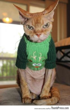 45 Absolutely Hilarious Pictures of Animals to Make You Laugh: Cat Face, Ugly Sweater, Funny Cat, Ugly Christmas Sweater, Angry Cat, Christmas Sweaters, Christmas Cat, Funny Animal, Grumpy Cat
