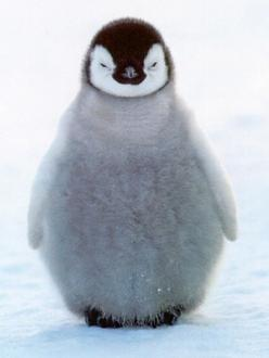 Baby.: Cute Animal, Cute Penguins, Happy Feet, Baby Animal, Favorite Animal, Baby Penguins, Penguin Baby, Adorable Animal