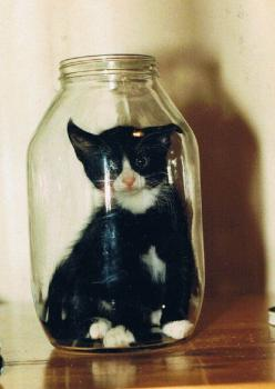 cats are nuts..haha: Help Me, Kitty Cat, Good Ideas, Tuxedo Cats, In A Jar, Poor Kitty, Kitty Kitty, Crazy Cat, Milk Bottle