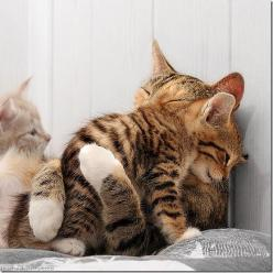 Come here..mama will make it all better!: Cute Animal, Kitty Cat, Mother, Kitty Hug, Cat Hug, Adorable Animal, Kittycat