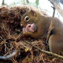 Mama Squirrel & Her Newborn Baby: God S Creatures, Animal Kingdom, Adorable Animals, Baby Squirrels, Red Squirrel, Mother S, Babysquirrel, Cute Animals, Baby Animals