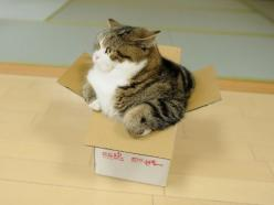 reminds me of my cat...the smaller the box the more desirable it is. lol: Cats Cats, Internet Cat, Funny Cat, Funny Picture, Fat Cat, Small Boxes, Bigger Box, Cat Lady