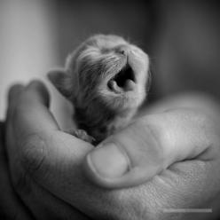 Squee! Baby kitten!: Kitty Cats, Baby Animal, Kitty Kitty, Newborn Kittens, Baby Cat, Kittycat, Adorable Animal