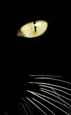 """""""I wish I could write as mysterious as a cat."""" --Edgar Allan Poe: Cat Face, Animals, Cat Eyes, Golden Eye, Black Cats, Kitty Kitty, Photo"""