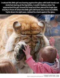 Adorable!!:): Picture, Animals, Big Cats, Girl, Sweet, Baby, Things, Tigers, Photo