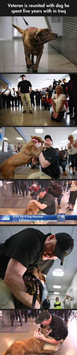 Awww: Random Pictures, Military Dogs, Dogs Veterans Day, Dogs Reunited, Hero, Heart Warming, Dog Reunited, 5 Years, Animal