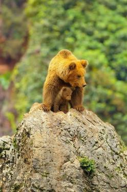 Bear and cub: Post, Photo, Rob Janné