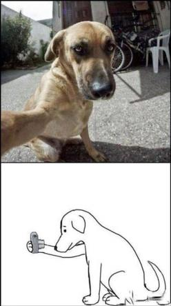 Dump A Day Funny Picture Dump Of The Day - 70 Pics!: Doggie Selfie, Animals, Dogs, Dog Selfie, Funny Picture, Funny Stuff, Funnies, Funny Animal