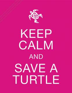I break for turtles. Then get out on the highway and move them off the road.: Pet Turtle, Turtle Pet, Turtle Quote, Turtles Tortoise, Seaturtle, Turtles Pet, Pet Tortoise