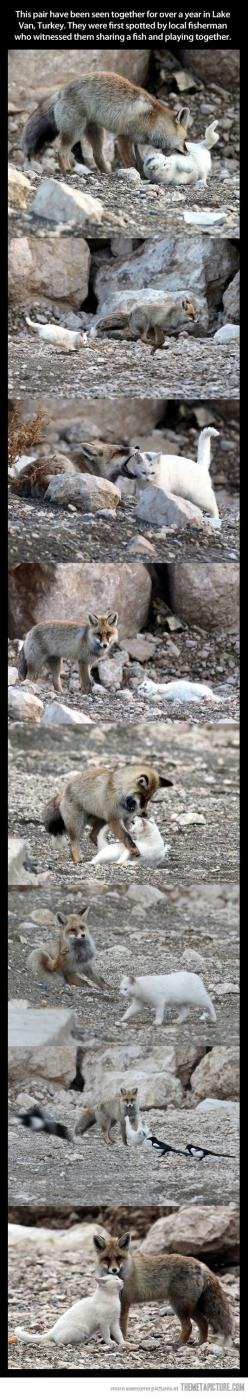 It's like the fox and the hound, only better.: Cats, Wild Cat, Animals, Best Friends, Odd Couple, Foxes
