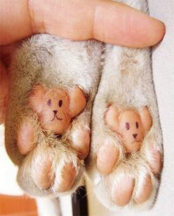 kitty paws! lol..i've seen this before, but I can never get my kitty to sit still long enough to draw on her paws :(: Cats, Animals, Dogs, Teddybear, Teddy Bears, Pet, Bear Paws, Funny