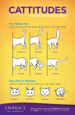 Learn to read your cat's body language! For more on cat body language, click the image!: Cats, Kitty Cat, Cattitude, Body Language, Kitty Kitty, Cat Stuff, Animal, Cat Lady