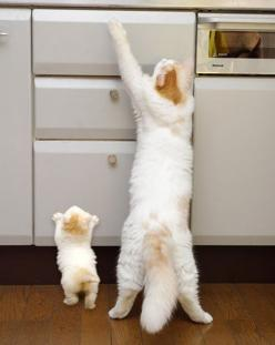 Meow.: Cats, Animals, Mother, Pet, Funny, Baby, Kittens, Kitty, Photo