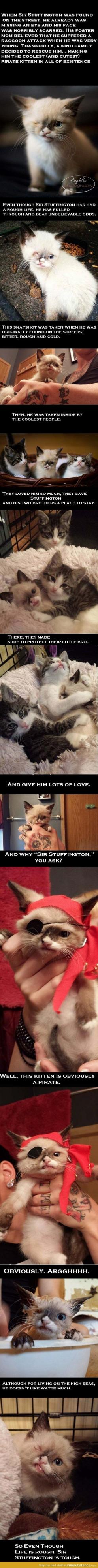 this is one of the sweetest little stories: Sweet Stories, Awwww He S, So Happy, Pirate Kitten, Beautiful Creatures, Animal