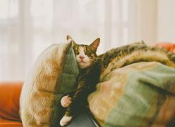 """when they sleep like this I just want to say """"KITTY KITTY KITTY!!!!"""" in a really high pitched voice! lol: Kitty Cats, Animals, Sleepy Kitty, Meow, Cat Nap, Chat, Photo, Cat Lady"""