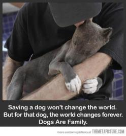 """Saving a dog won't change the world. But for that dog, the world changes forever. Dogs are family."" <3: Animals, Dogs, Family, Pitbull, Pets, Pit Bull, Puppy, Families, Friend"