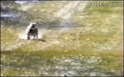 ATTACK/RETREAT. | The Best Cat Gif Post In The History Of Cat Gifs