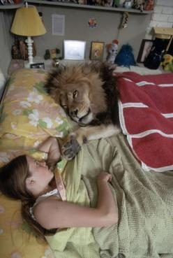 Here's Griffith lying in bed with him in May 1971. | These Photos Of A Teenage Melanie Griffith And Her Pet Lion In The 1970s Are Quite Something: Cat, Animals, Melanie Griffith, Stuff, Pet Lion, Bed, Pets, Funny, Photo