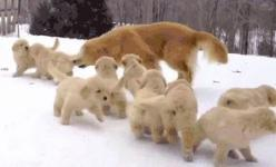 The attack of the world's cutest puppies.   25 Animal GIFs That Will Warm Your Cold, Dead Heart