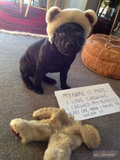 21 of the Greatest DogShaming Pics: HIDE YO' UNDERWEAR - BarkPost....this made me laugh wayyyy too loud!! LOL!!: Animals, Dog Shaming, Pet, Funny Stuff, Funnies, Granny Pantie, Funny Animal