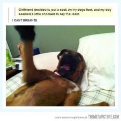 Some dogs are easily shocked…: Sock, Giggle, Animals, Dogs, Funny Pictures, Funny Stuff, Humor