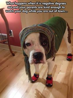 Thought this was appropriate for the weather we are having now. Love the socks AND shoes. :): Animals, Dogs, Funny Pics, Funny Pictures, Pitbull, Funny Quotes, Funnies, Puppy