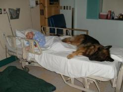A story without words: Germanshepherd, Animals, Dogs, Best Friends, Sweet, Pet, German Shepherds, Hospital