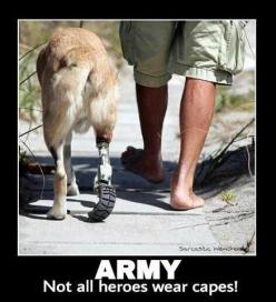 ♥ War heros: Animals, Dogs, Wear Capes, Heroes Wear, Friend, Military