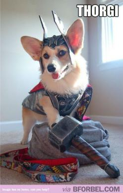 @Emily Schoenfeld Tipton THIS IS FOR YOU! ... except you would probably like a Lorki better. :P: Corgis, Halloween Costume, Cosplay, Animals, Dogs, Stuff, Pet, Funny, Thorgi