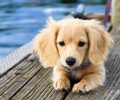10 most loyal dog breeds of all time {how cute!}