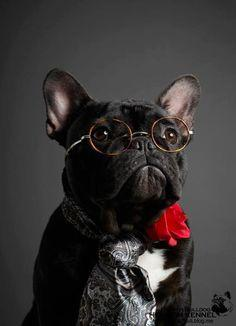 """""""Yes, did someone want to see the bank president?"""" #dogs #pets #FrenchBulldogs"""