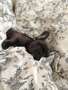 Baby Bella Donna! Thanks for sharing her with us Alexandra! from Batpig & Me http://on.fb.me/TXM2tT